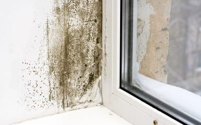 5 Tips to Prevent Mold in the Home